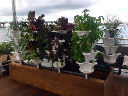 Miami Science Barge Deck Garden