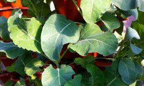 High Density Vertical Growth (HDVG) Garden
