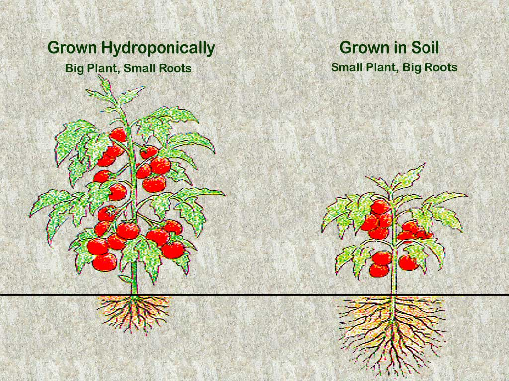 Soil versus Hydroponics