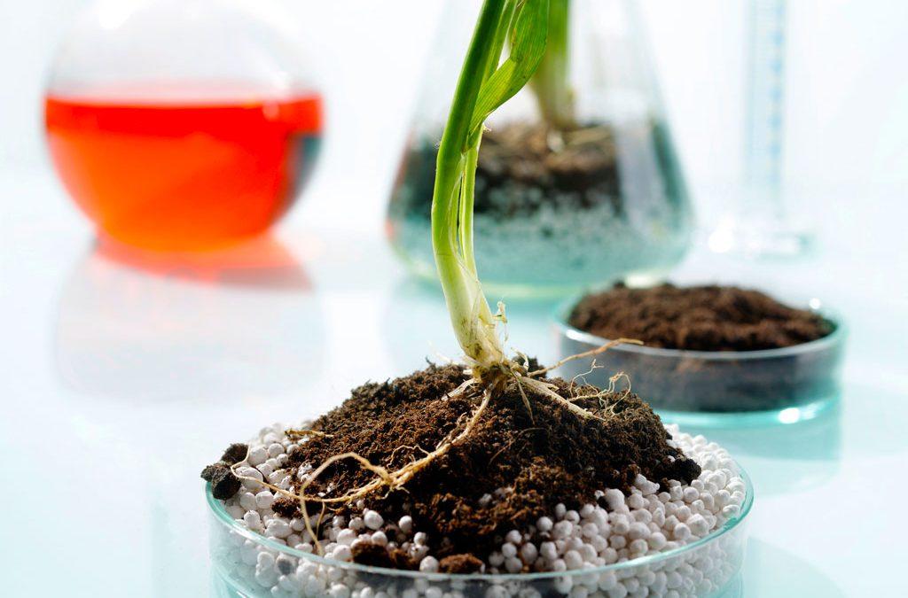 Organic versus Inorganic: What's the Difference?