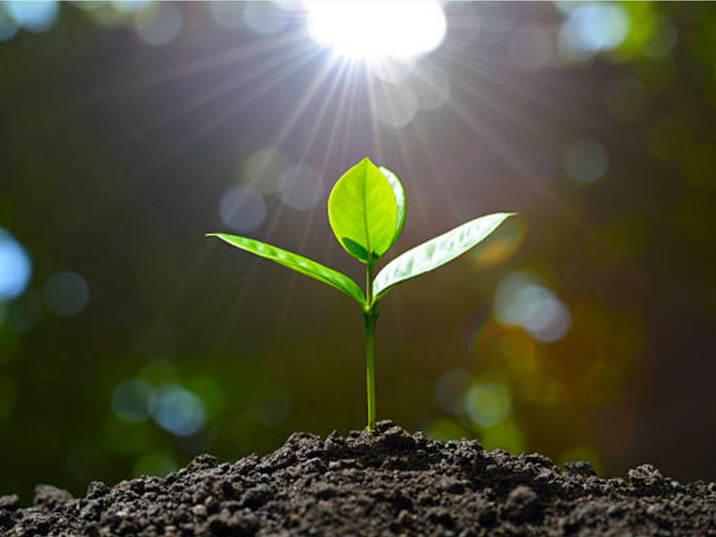 How Plants Uptake Nutrients