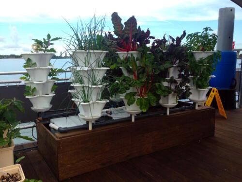 Miami Science Barge Deck Garden 2