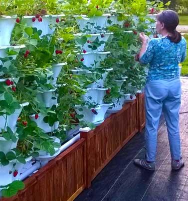 banner-3-deck-garden