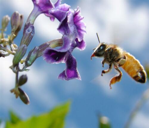 bee-lift-off