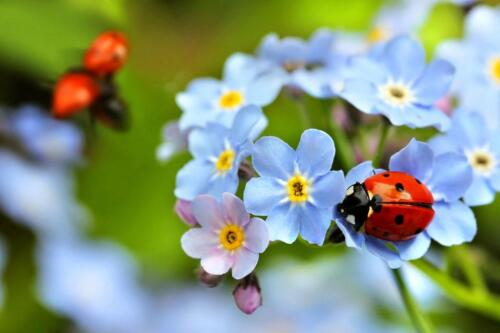 Ladybug-131934378