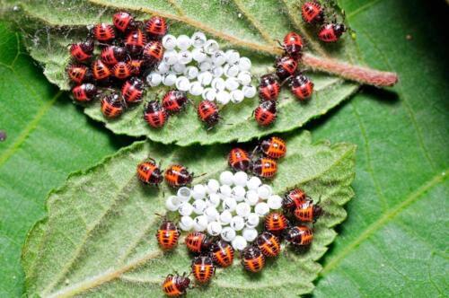 ladybug-512961189