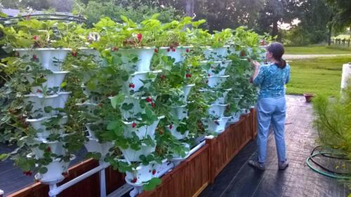 Brenda with Roof Top Strawberry Garden