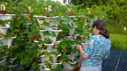 Brenda with Strawberry Garden
